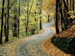 Autumn Road, Percy Warner Park, Nashville, Tennessee