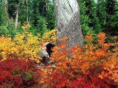 Autumn at Heather Meadows, North Cascades, Washington